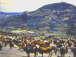 The cattle market in the 1960s